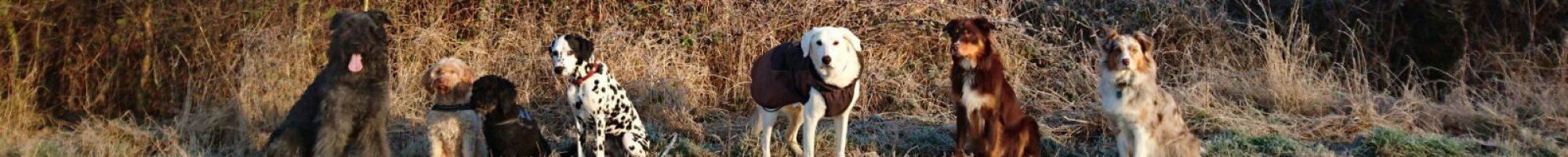 Woods-Dog